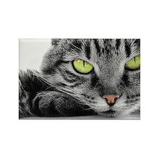 grey cat green eyes Rectangle Magnet