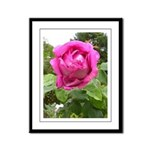 American Beauty Rose Framed Panel Print
