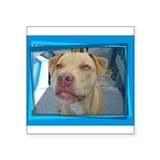 Pit Bull Luv Rectangle Sticker