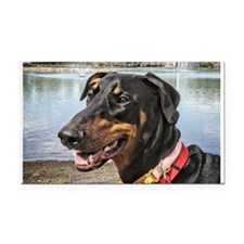 Doberman at Lake Ella Rectangle Car Magnet