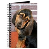 Basset Puppy Journal
