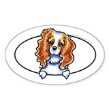 CKCS Blenheim Peeking Bumper Decal