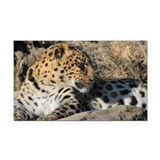 Amur Leopard Rectangle Car Magnet