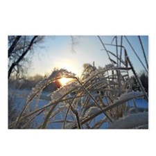 Snowflakes on Grass Postcards (Package of 8)