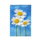 Daisy Wildflower Rectangle Magnet