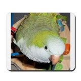 Playful Parrot Mousepad