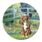 SFP-Bridge - Australian Shepherd (red merle.png Ro