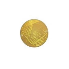 Unique Microbiology Mini Button (10 pack)