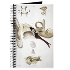 Cute 1800s anatomical artwork anatomical illustration Journal