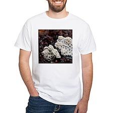 5272 seashells and barnacles T-Shirt