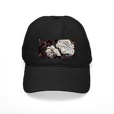 Sports recreation Baseball Hat