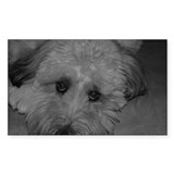 WHEATON TERRIER Rectangle Decal
