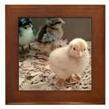 Baby Chicks Framed Tile