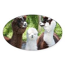 Three different alpacas - Decal