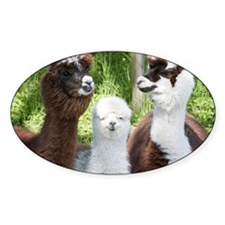 Three different alpacas - Decal