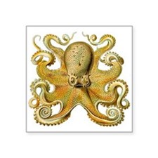 Vintage octopus cephalopod scientific drawing Stic