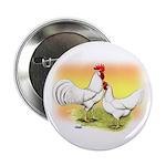 White Leghorn Chickens 2.25