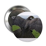 "Peregrine Falcon 2.25"" Button"
