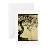 Cute Zen Greeting Cards (Pk of 10)