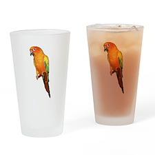Sun Conure Drinking Glass