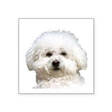 Fifi the Bichon Frise Rectangle Sticker