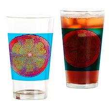 Liana stem, light micrograph - Drinking Glass