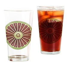 Diatom, SEM - Drinking Glass