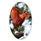 Scarlet Ibis Oval Decal