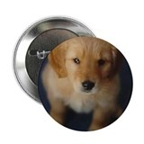 "Golden Retriever Puppy 2.25"" Button"
