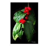 Honeysuckle Berries Postcards (Package of 8)