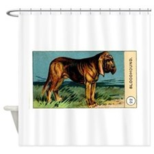 Antique 1908 Bloodhound Dog Cigarette Card Shower