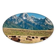 Herd of American Bison - Decal