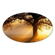 Oak tree at sunrise - Decal