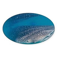 Whale shark - Decal