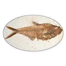 Fossilised fish - Decal