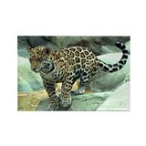 Jumping Jaguar Rectangle Magnet