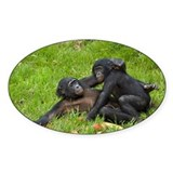 Bonobo apes mating - Decal