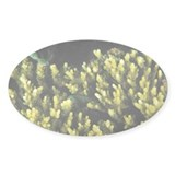 Blue-green damselfish - Decal