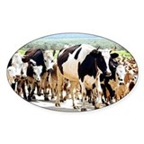 Herd of cows and goats - Decal