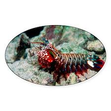 Mantis shrimp - Decal