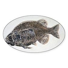 Phareodus fish fossil - Decal