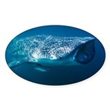 Whale shark and pilot fish - Decal