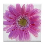 Gerbera flower (Gerbera sp.) - Tile Coaster