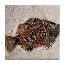 Fossilised fish, Priscacara serata - Tile Coaster