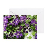 Purple Clematis Greeting Cards (Pk of 20)