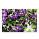Purple Clematis Postcards (Package of 8)