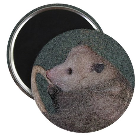 "Sleepy Possum 2.25"" Magnet (100 pack)"