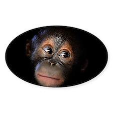Baby Orangutan Face Decal