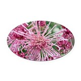Chrysanthemum 'Valerie' - Oval Car Magnet