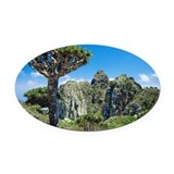 Dragon's blood tree - Oval Car Magnet